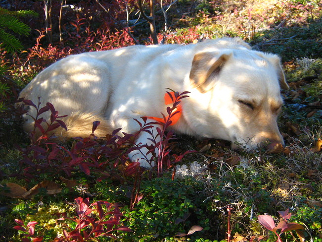 Dog-Tired! Deer Lake, Newfoundland and Labrador Canada