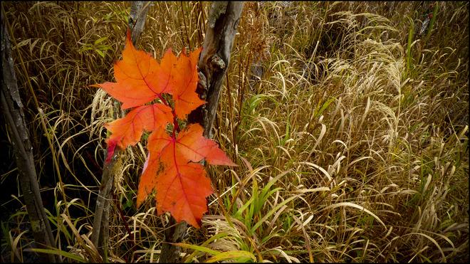 Sherriff Creek, by the pond a few last leaves. Elliot Lake, Ontario Canada