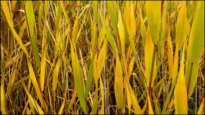 Sherriff Creek, tall yellow grasses. Elliot Lake, Ontario Canada