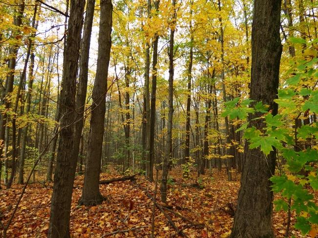 fallen leaves Brockville, Ontario Canada