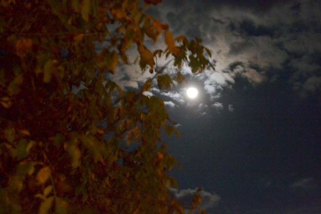 Harvest moon Oxley, Ontario Canada