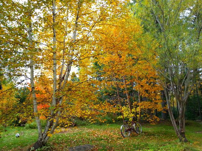 Oct 20 Glovertown, Newfoundland and Labrador Canada