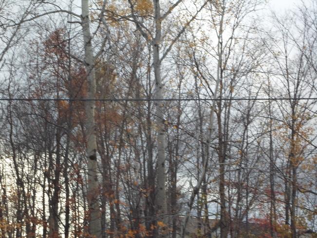 Clouds behind trees, no leaves Elliot Lake, Ontario Canada
