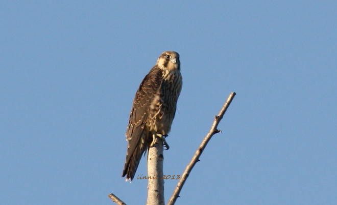 morning hunt Brighton, Ontario Canada