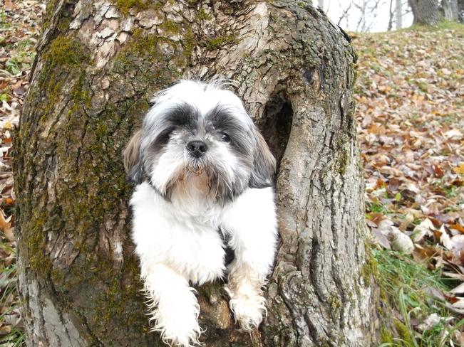 Dog In A Log Massey, Ontario Canada