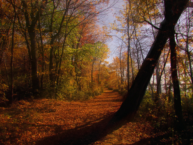 Fall North Bay, Ontario Canada
