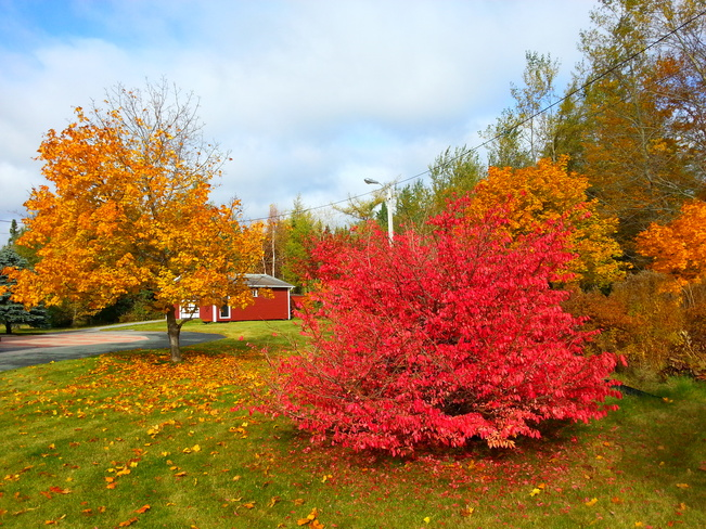 Oct 22 Glovertown, Newfoundland and Labrador Canada