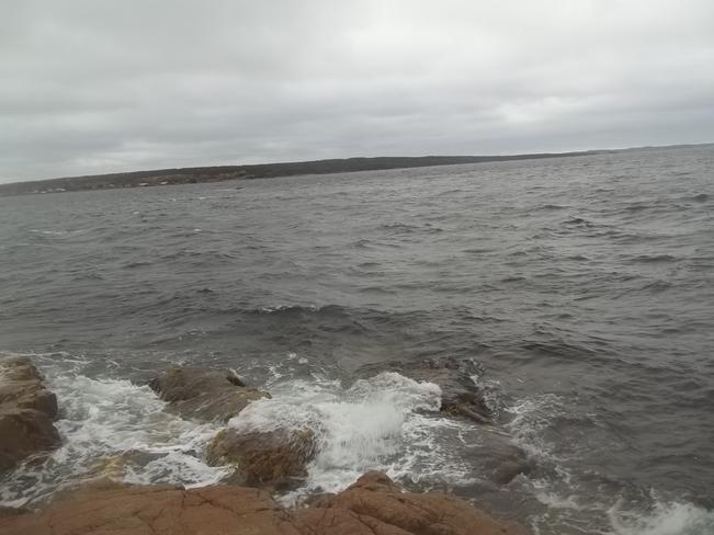 Windy Afternoon Birchy Bay, Newfoundland and Labrador Canada