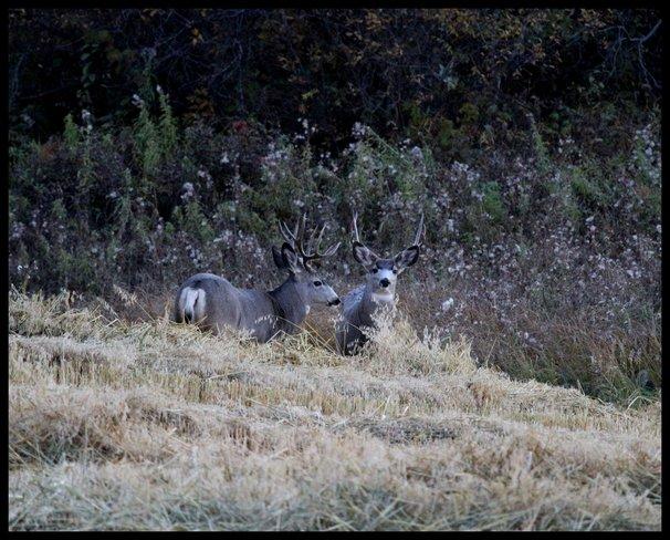 Two Bucks Wetaskiwin County No. 10, Alberta Canada