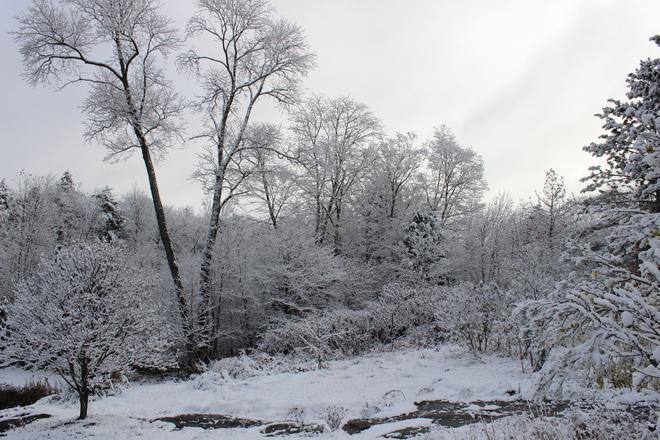 Snow Bracebridge, Ontario Canada