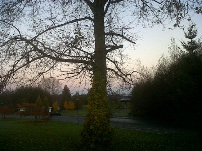 Tree in Simm's Park Courtenay, British Columbia Canada
