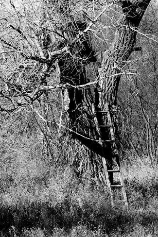 Ladder to where? Brooks, Alberta Canada
