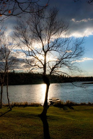The Tree Alberton, Prince Edward Island Canada