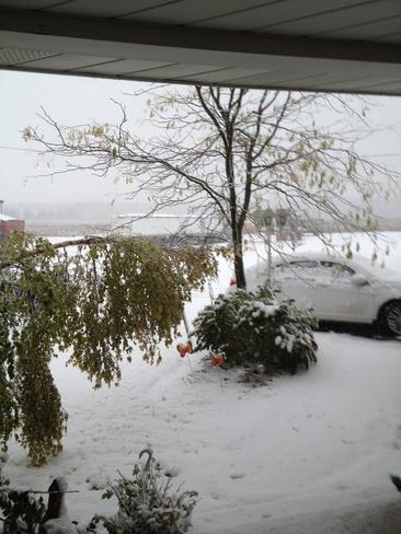 snow Grand Valley, Ontario Canada