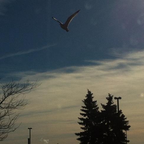sky Etobicoke, Ontario Canada