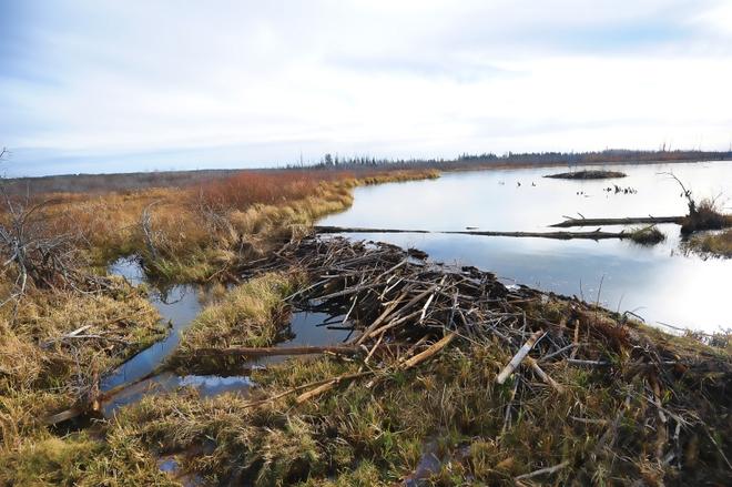 Beaver Dam Prince Albert, Saskatchewan Canada