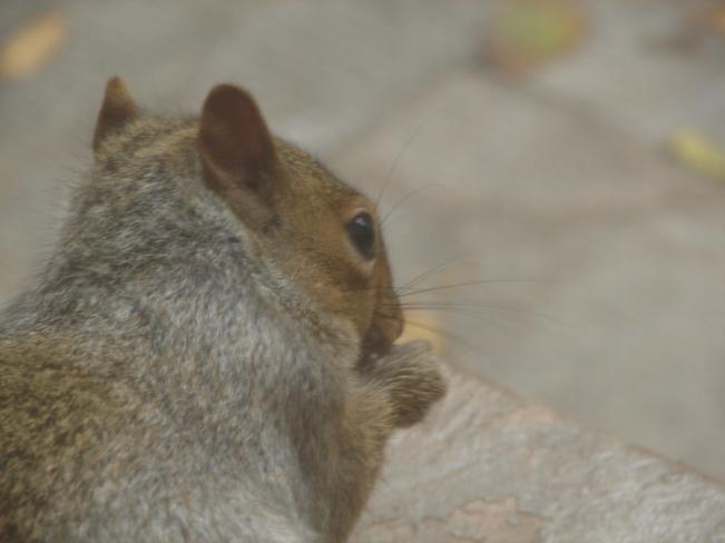 Enjoying my peanut! Brampton, Ontario Canada