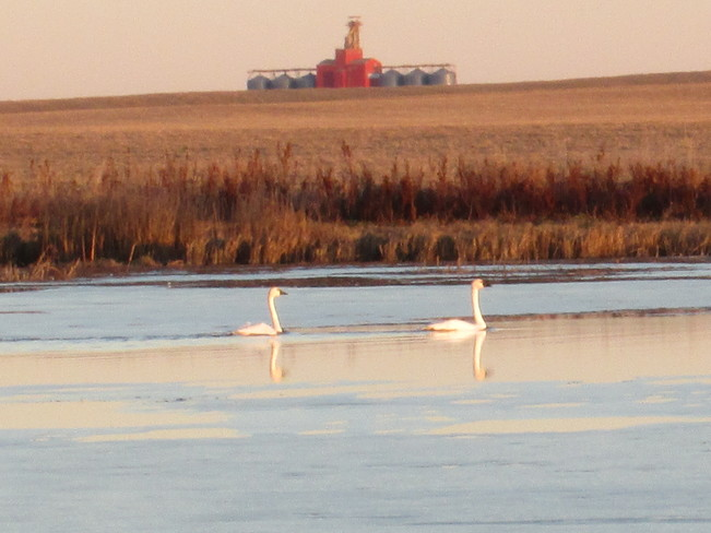 Two Birds Kindersley No. 290, Saskatchewan Canada