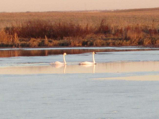 Swans Kindersley No. 290, Saskatchewan Canada