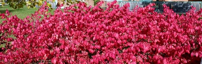 Last Fall colors Hamilton, Ontario Canada