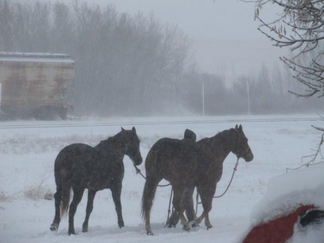 No Go Senlac, Saskatchewan Canada