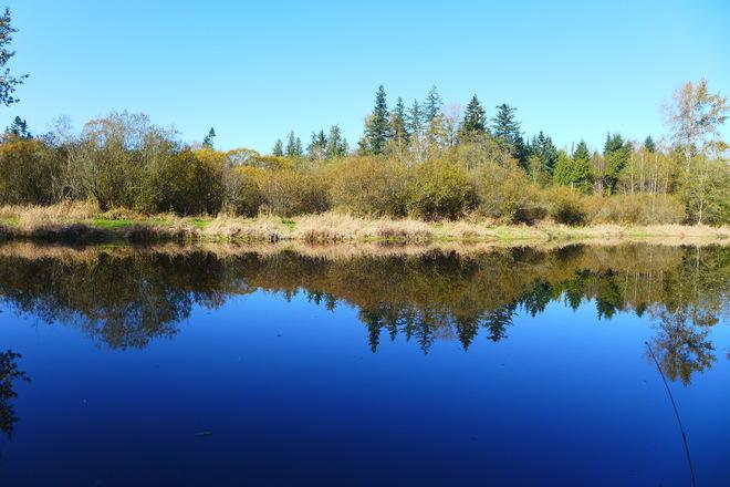 Pond reflection Langley, British Columbia Canada