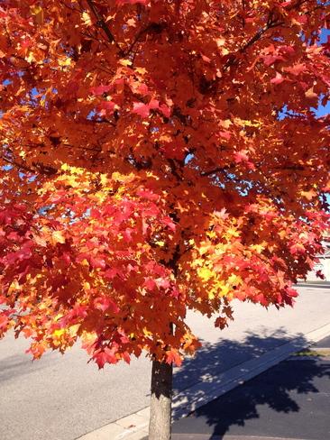 Colourful splendor Kitchener, Ontario Canada