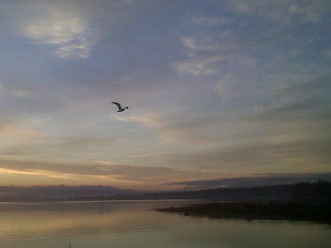 Frosty morning flight. Courtenay, British Columbia Canada