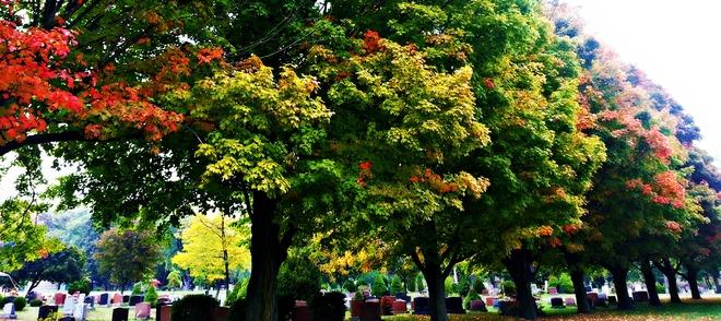 changing leaves Niagara Falls, Ontario Canada