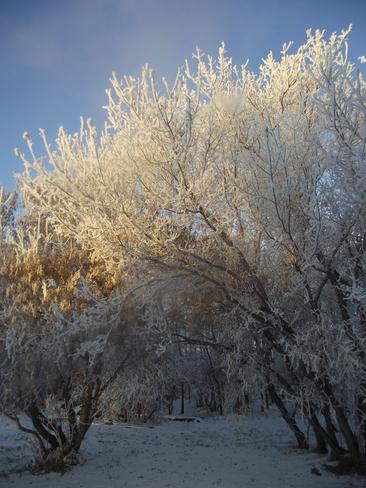 Frosty Morning Redwater, Alberta Canada
