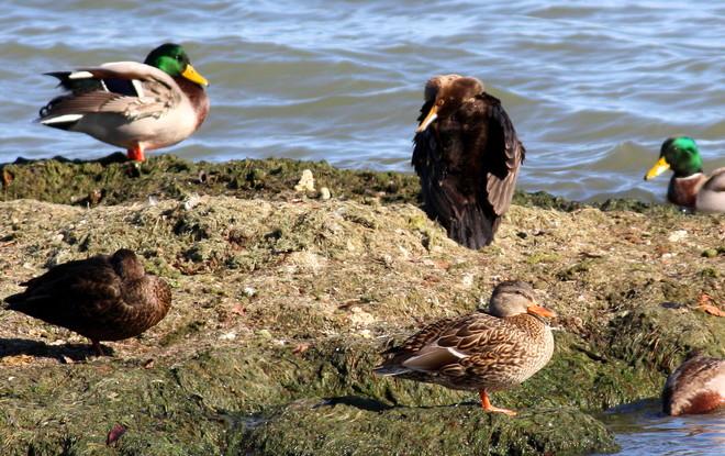 sharing their mound Brighton, Ontario Canada
