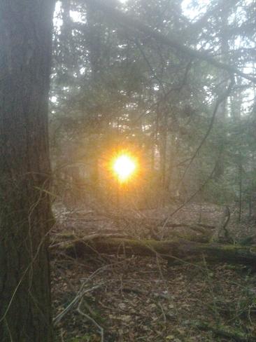 Sundown In The Bush