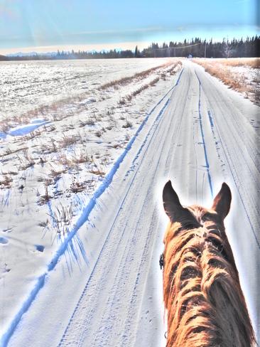 Going back to the barn Bragg Creek, Alberta Canada