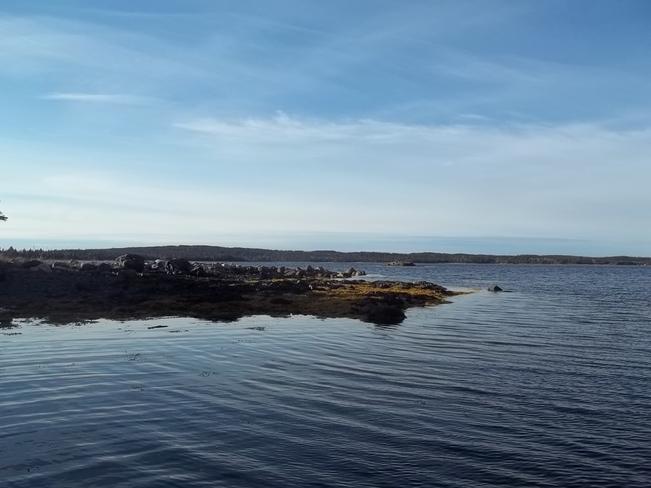 Calm Morning Birchy Bay, Newfoundland and Labrador Canada