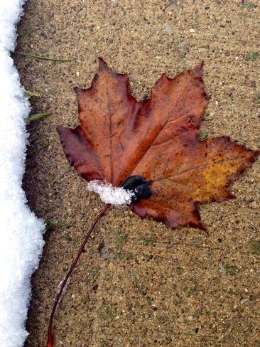 Snowey Sidewalks St. Thomas, Ontario Canada