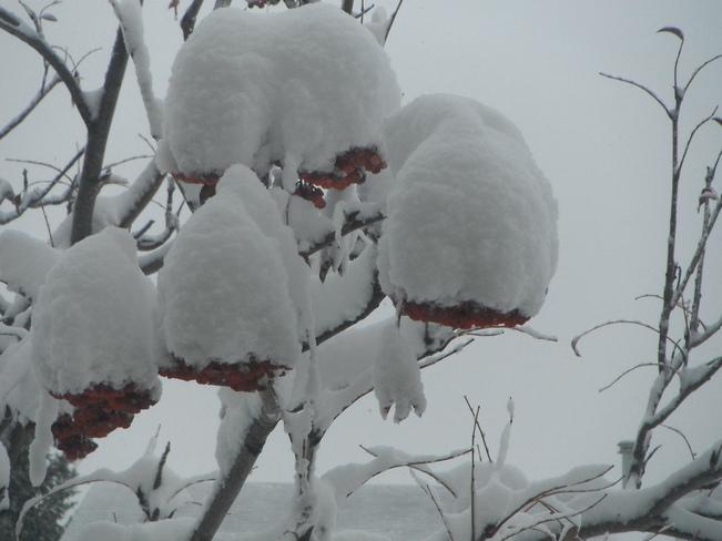 Berry Cold Outside Calgary, Alberta Canada