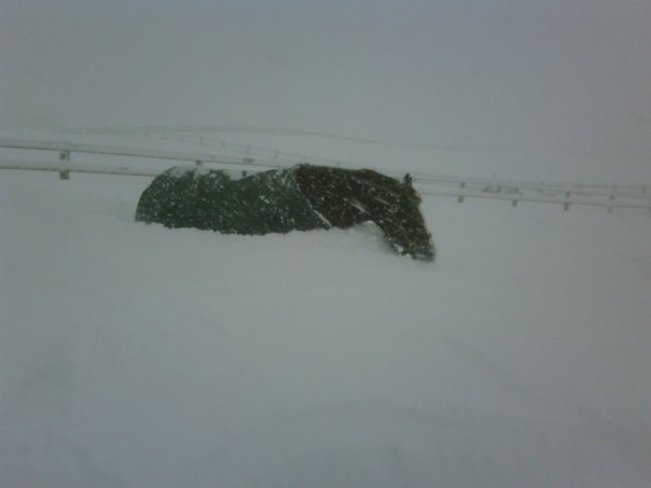 a meter of snow in 2 days Bracebridge, Ontario Canada