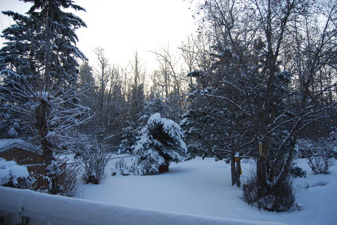 glorious snowy morning sunrise Red Deer, Alberta Canada