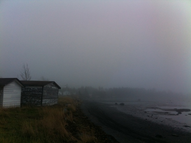 Foggy Backyard Gander, Newfoundland and Labrador Canada