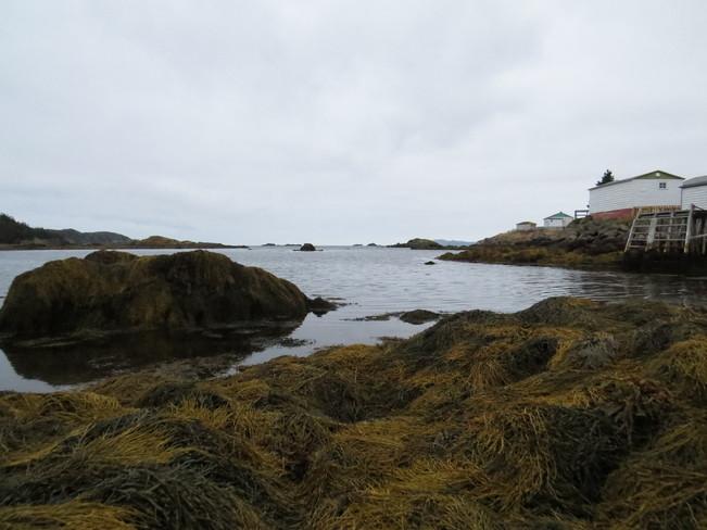 low tide Rock Harbour, Newfoundland and Labrador Canada