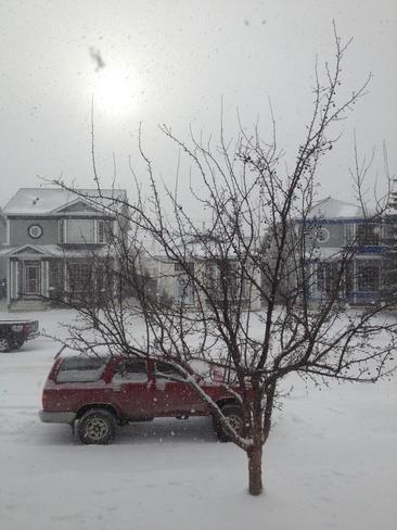 snowing Calgary, Alberta Canada