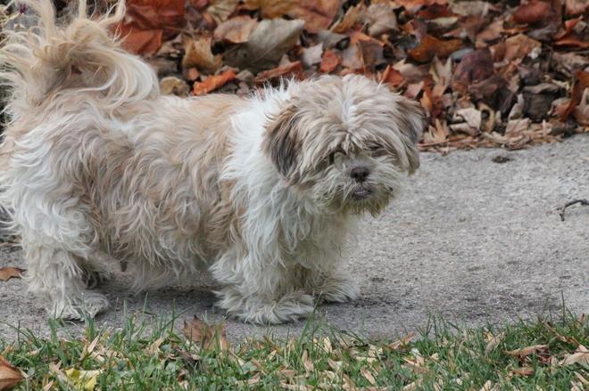Fall dog Aylmer, Ontario Canada