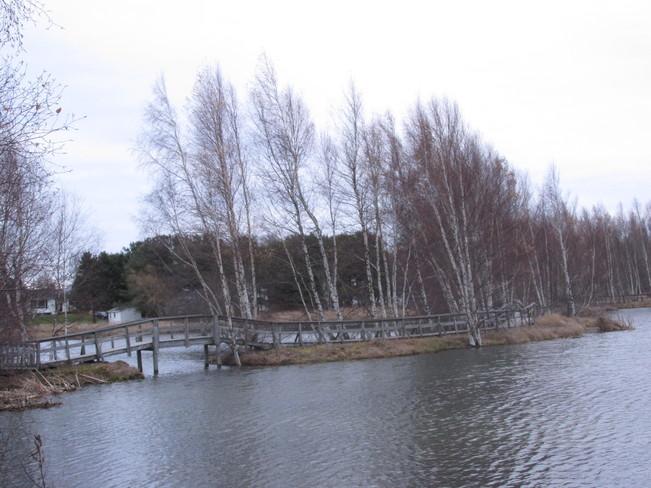 Trees stripped pretty bare Sackville, New Brunswick Canada
