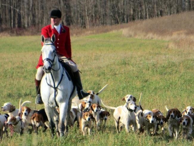 Fox hounds & Rider London, Ontario Canada