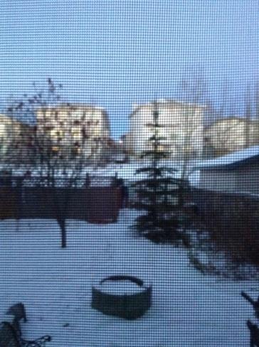 Snowy Evening Calgary, Alberta Canada