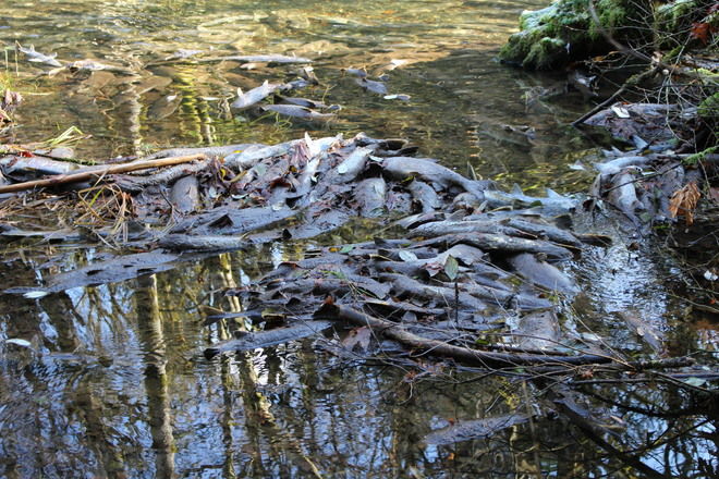 cirlce of life Goldstream, British Columbia Canada