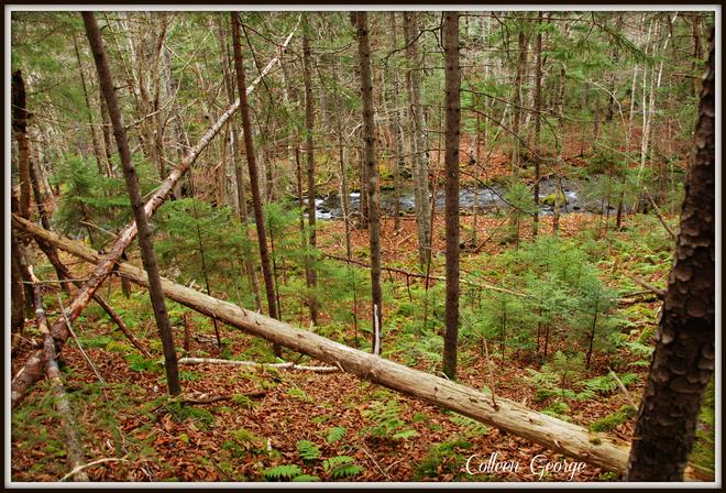 November Forest Centreville, Nova Scotia Canada