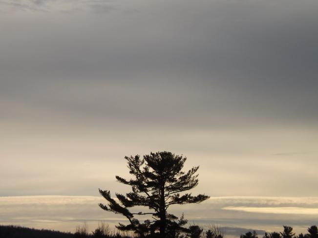 the tree New Minas, Nova Scotia Canada