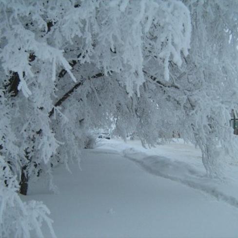 frost Lloydminster, Saskatchewan Canada