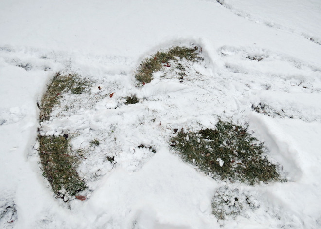 snow angel Kanata, Ontario Canada